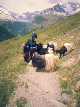 Zermatt Hike with 4-Legged Friends