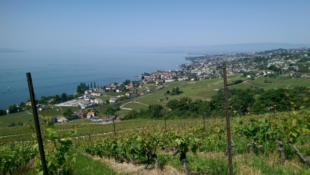 Lutry Wine Vineyards, a short train ride from Lausanne.